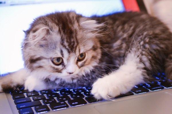 FXシストレの邪魔をする猫