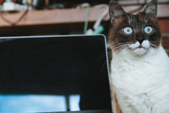 インヴァスト証券のシストレ24の口コミを見て驚く猫